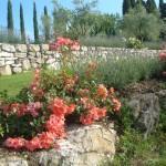 piante arbusti ornamentali cespugli idee per abbellire