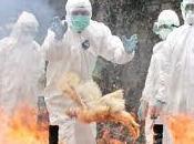 H5N1, continua diffusione sud-est Asiatico