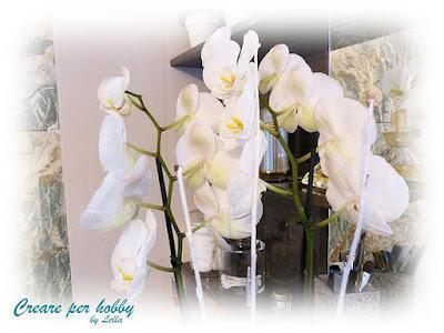 Le mie orchidee paperblog for Progetta le mie planimetrie del bagno