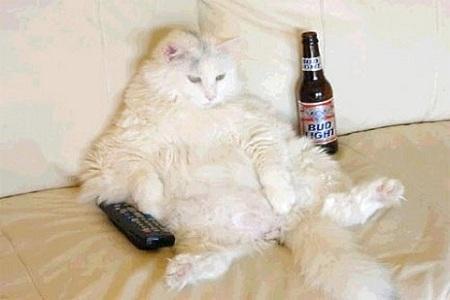 gatto obeso 1 copertina1 Cani e Gatti obesi in U.S.A. FOTO