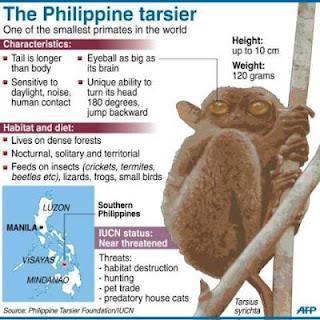 tarsio filippine