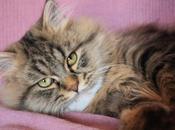 Quando micio cleptomane Ovvero: viaggio gatti ladruncoli, feticisti egocentrici