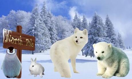 11 sfondi + 19 clipart con tema il freddo polare