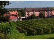 "azienda vinicola ""Vignarosa"" Colle Umberto 1813"