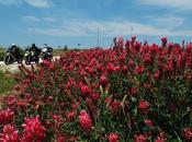 """ritmo Carrese"""" aprile/1 maggio 2012"""