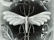 scienza arte: Ernst Haeckel