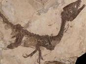 fossile dinosauro Ciro stato sottoposto all'autopsia