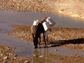 Scarsità d'acqua, colpisce quasi miliardi persone