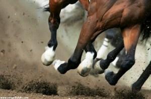 I cavalli da corsa sequestrati a boss costano troppo si for Giochi di cavalli da corsa