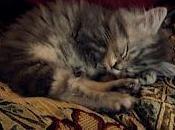 Gatti nodi