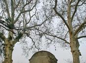 Alberi monumentali, platani Castellanza (VA)