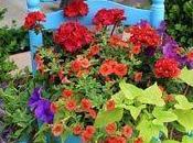 Gardening without garden
