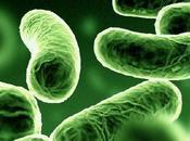Probiotici fermenti lattici: un'arma combattere disturbi intestinali