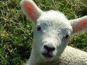 Pasqua: l'eccidio degli innocenti. Perchè mangiare l'agnello