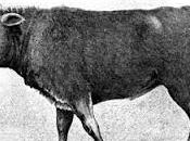 rintraccia origine bovini moderni piccola mandria 10.500 anni