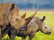Avaaz Salviamo rinoceronte firma anche petizione!
